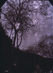 FAR, étude d'arbre, , négatif, 19x14cm )