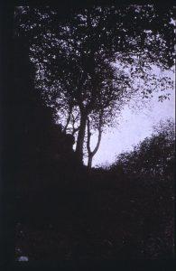 FAR, étude d'arbres négatif papier Whatman, 23x14,8cm, col;part.