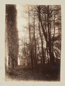 F.T., Allée de peupliers, s.d. vers 1880-1890. Épreuve sur  papier albuminé, 40x30 cm. Coll. part.