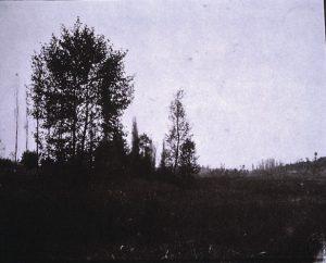 FAR. Environs de Crémieu, grands arbres,négatif papier, 13,5x17,5cm, col. CBT