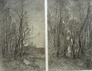 F.T. heliog. FAR grands arbres à Thuile