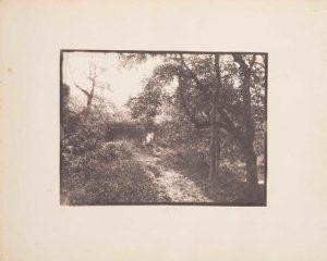FAR, arbres, photographie positif papier 17x13,8cm, col.part.,